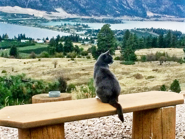 Country Ridge cat looking over the view of Wood and Duck Lake in Lake Country BC